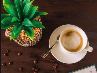 Le lait doré un Succédané du café
