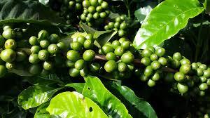 Top 10 des grains de café en 2020
