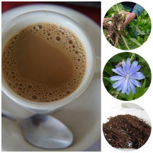la chicorée succédané du café